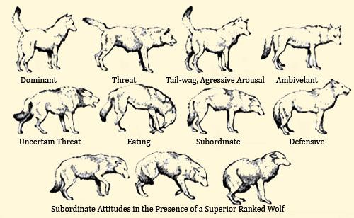 Verbal vs Nonverbal Communication